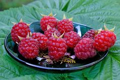 Ripe appetizing raspberry Stock Photo