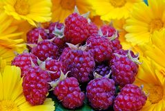 Ripe appetizing raspberry Royalty Free Stock Photo