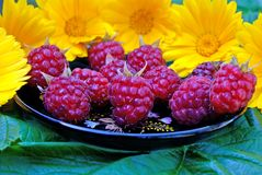 Ripe appetizing raspberry Stock Photos