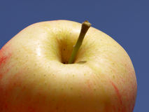 Ripe apple. Macro view of ripe red and yellow apple with blue background royalty free stock photo