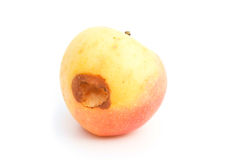 Ripe apple bited by insect Royalty Free Stock Images