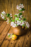 Ripe apple and blossoming branch of an apple-tree in a clay jar Stock Images