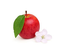 Ripe apple with a flower. Stock Image