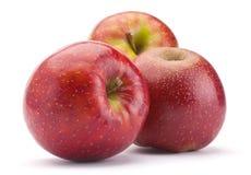 Ripe apple fruit Stock Image