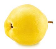 Ripe apple-quince with stem isolated Stock Photos