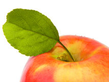 Ripe apple. Royalty Free Stock Photos