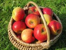 Ripe apple in wicker Stock Images