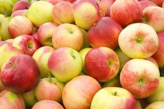 Ripe apples Stock Photos