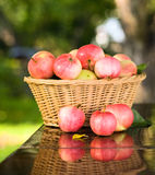 Ripe apples. Stock Photography