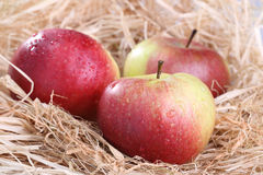 Ripe apples on the background Royalty Free Stock Photo