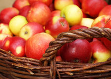 Ripe apples in the basket Royalty Free Stock Images