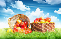 Ripe apples in a basket Stock Photos