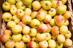 Ripe apples in basket at food market or farm Royalty Free Stock Photo