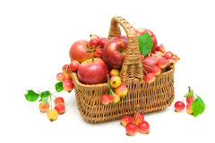 Ripe apples in a basket on a white background Royalty Free Stock Image