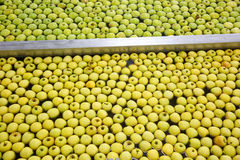 Ripe apples being processed and transported for packing. Ripe apples being processed and transported for size and color sorting and for packing in an industrial Royalty Free Stock Photo