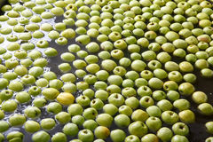Ripe apples being processed and transported for packing. Ripe apples being processed and transported for size and color sorting and for packing in an industrial Stock Photos