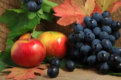 Ripe apples and bunch of grapes. Still life with ripe apples and bunch of grapes on wood Stock Image