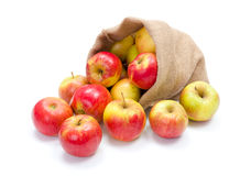 Ripe apples in burlap sack Stock Image