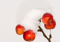 Ripe apples covered with snow Royalty Free Stock Photography