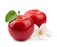 Ripe apples fruit with flowers Royalty Free Stock Photography