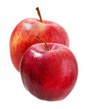 Ripe apples. Royalty Free Stock Image