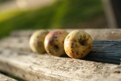 Ripe apples are lying on a wooden bench. stock image