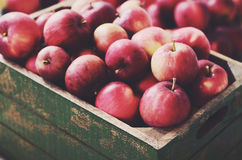 Ripe apples in rustic wooden crate Stock Image