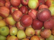Ripe apples sorts royal hala stock photography