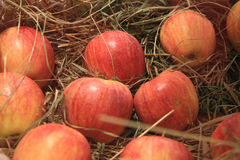 Ripe apples on straw Royalty Free Stock Photography