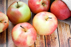 Ripe apples Stock Images