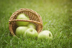 Ripe apples in wicker basket Stock Photo