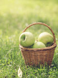 Ripe apples in wicker basket Royalty Free Stock Images