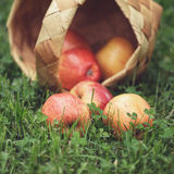 Ripe apples in wicker basket Stock Photography