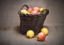 Ripe apples. On wicker basket with rustic background royalty free stock photo