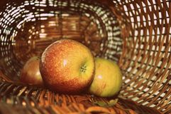 Ripe apples in the wicker-basket stock photography