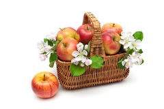 Ripe apples in a wicker basket on a white background. Horizontal photo Stock Image