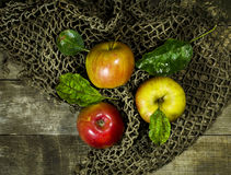 Ripe apples on a wooden background. With a grid royalty free stock image