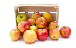 Ripe apples in wooden crate. Fresh ripe apples spreading out from wooden crate Royalty Free Stock Photo