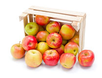 Ripe apples in wooden crate. Fresh ripe apples spreading out from wooden crate Royalty Free Stock Photos
