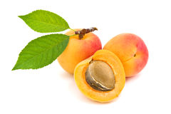 Ripe apricot. Ripe apricot with green leaves stock photography