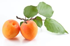 Ripe apricot on the branch and one apricot near isolated on white background royalty free stock image