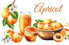 Ripe apricot card. Watercolor hand drawn illustration, isolated on white background.  royalty free stock photo