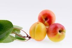 Ripe apricot closeup Stock Image