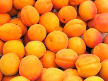 Ripe apricot fruit. Piled of ripe orange apricot fruit stock image