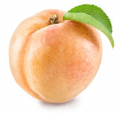 Ripe apricot fruit. Stock Image