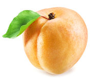 Ripe apricot fruit. Royalty Free Stock Image