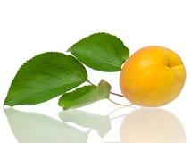 Ripe apricot fruit Royalty Free Stock Photo
