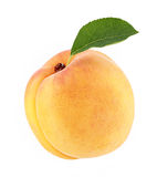 Ripe apricot with green leaf Stock Photography
