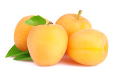 Ripe apricot isolated Royalty Free Stock Image