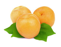Ripe apricot with leaves Royalty Free Stock Photography